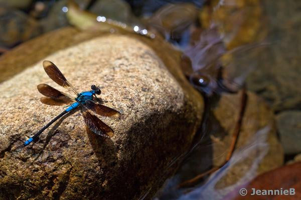 Dragonfly on Rock - Stunning Photo Chalkboards