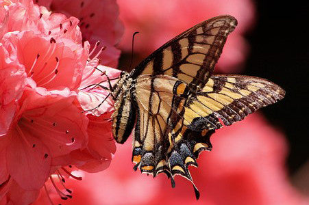 Butterfly On Red Flower - Stunning Photo Chalkboards