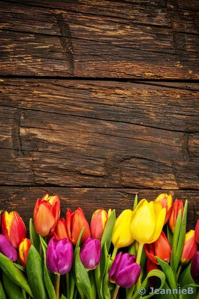 Colourful Tulips On Barnboard