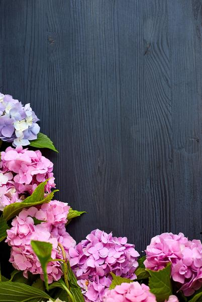Hydrangea Vertical - Stunning Photo Chalkboards