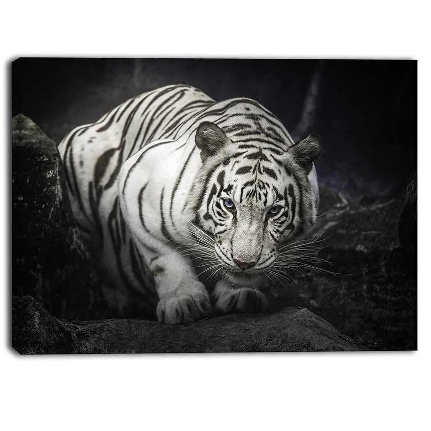 Canvas Print - White Tiger Photography Canvas Art Print | PT6426