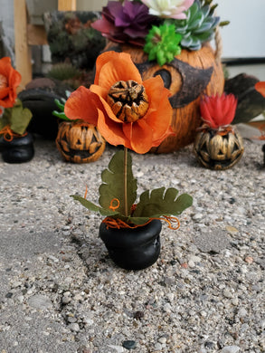 Mini Man Eating Jackolantern Flower