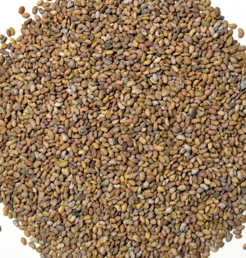 Feeders Grain and Supply Inc.  Creeping Alfalfa Seed, Feeders Grain and Supply Inc.