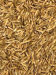 Feeders Grain and Supply Inc.  Feast II Tetraploid Ryegrass Seed, Feeders Grain and Supply Inc.