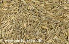 Feeders Grain and Supply Inc.  Regular Orchard Grass Seed, Feeders Grain and Supply Inc.