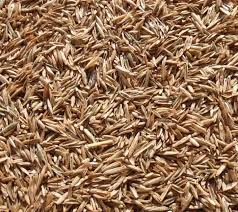 Feeders Grain and Supply Inc.  Ryegrass Perennial 1#, Feeders Grain and Supply Inc.