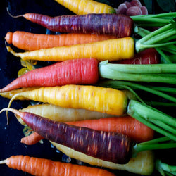 500 Seeds Per Pack Carrot Seeds - 9 Colors Available