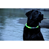 Safety Pet Collar With LED And Printed Design By Project Pet Lovers Club