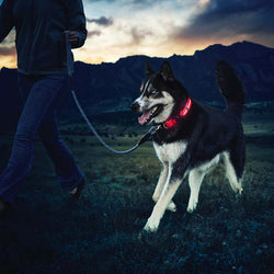 Buy 1 Get 1! - Safety Glowing Dog Collars and Leashes By Pet Lovers Club
