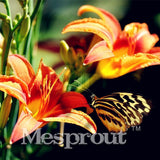 100 Seeds Per Pack - 20 Colors Lily Seeds By Mesprout
