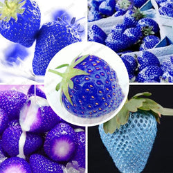 40 Seeds Per Pack - Blue Strawberry