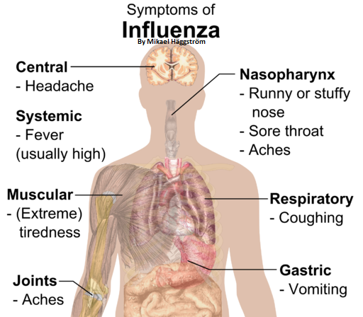 Flu & Influenza - Massage Therapy, Spa & Salon Service Contraindication