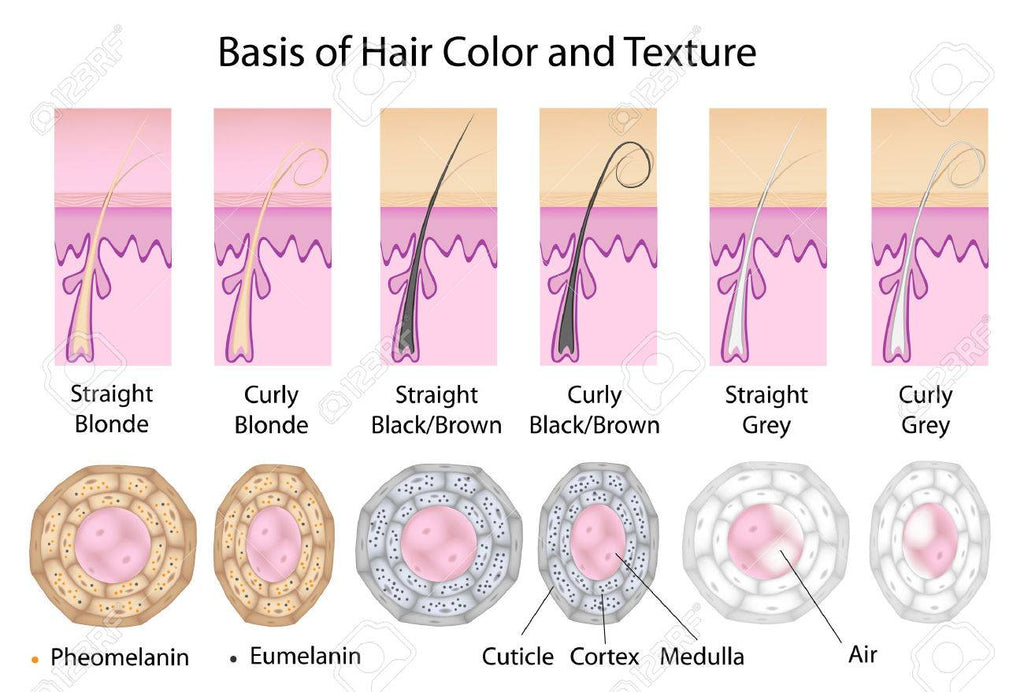 Natural Hair Color & Pigmentation