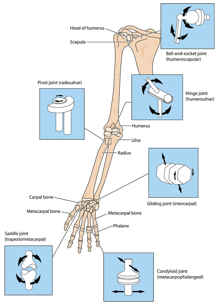 Muscle, Ligament & Joint Mobility Info for Massage Therapy