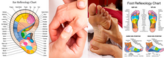 12 CE Hour Reflexology: Foot, Hand & Ear