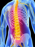 6 CE Hour Advanced Deep Tissue Work for Upper, Mid & Low Back $95