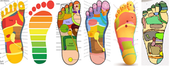 1 CE Hour Foot Reflexology Theory ONLINE