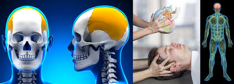 36 CE Craniosacral Foundation Level I & II