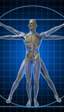 12 CE Advanced Muscular Therapy & Orthopedic Joint Overview - 2 Day Class