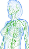 6 CE Hour Lymphatic Drainage Basics