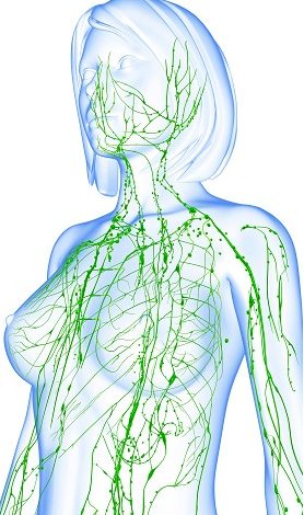 12 CE Hour Lymphatic Drainage Basics & Lymphatic Facial $185