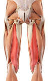 6 CE Advanced Myofascial Deep Tissue: Shoulder & Knee