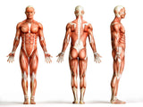 24 CE Hour Advanced Deep Tissue Master - 3 Days $350