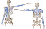 6 CE Hour Advanced Deep Tissue for Shoulders, Neck and Chest $95