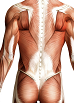 6 CE Hour Advanced Deep Tissue for Upper, Mid & Low Back