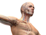 6  Hour Lymphatic Drainage REFRESHER CLASS - No CE Credit or Certificate Awarded