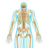 12 CE Hour Lymphatic Drainage