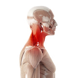 12 CE Advanced Deep Tissue, Palpation & Assessment for Back & Neck Live Interactive Webinar