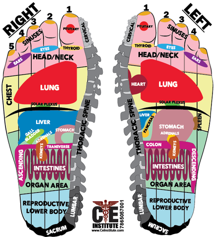 12 CE Hour Foot Reflexology with Zone Therapy