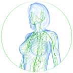 12 CE Hour Lymphatic Drainage Basics & Lymphatic Facial Live Interactive Webinar