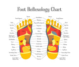 6 CE Hour Foot Reflexology Basics