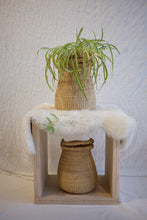 Egg Basket / Elephant Grass
