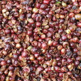 Cascara, Finca Isnul (Wholesale)
