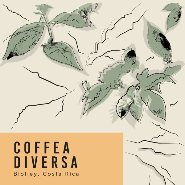 Costa Rica Coffea Diversa Mokka Winey