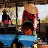 Myanmar The Lady / Carbonic Maceration Red Honey