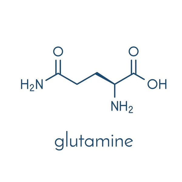 Importance of Glutamine
