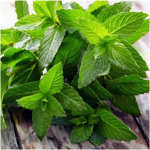 Peppermint benefits, more than just a pleasant scent.