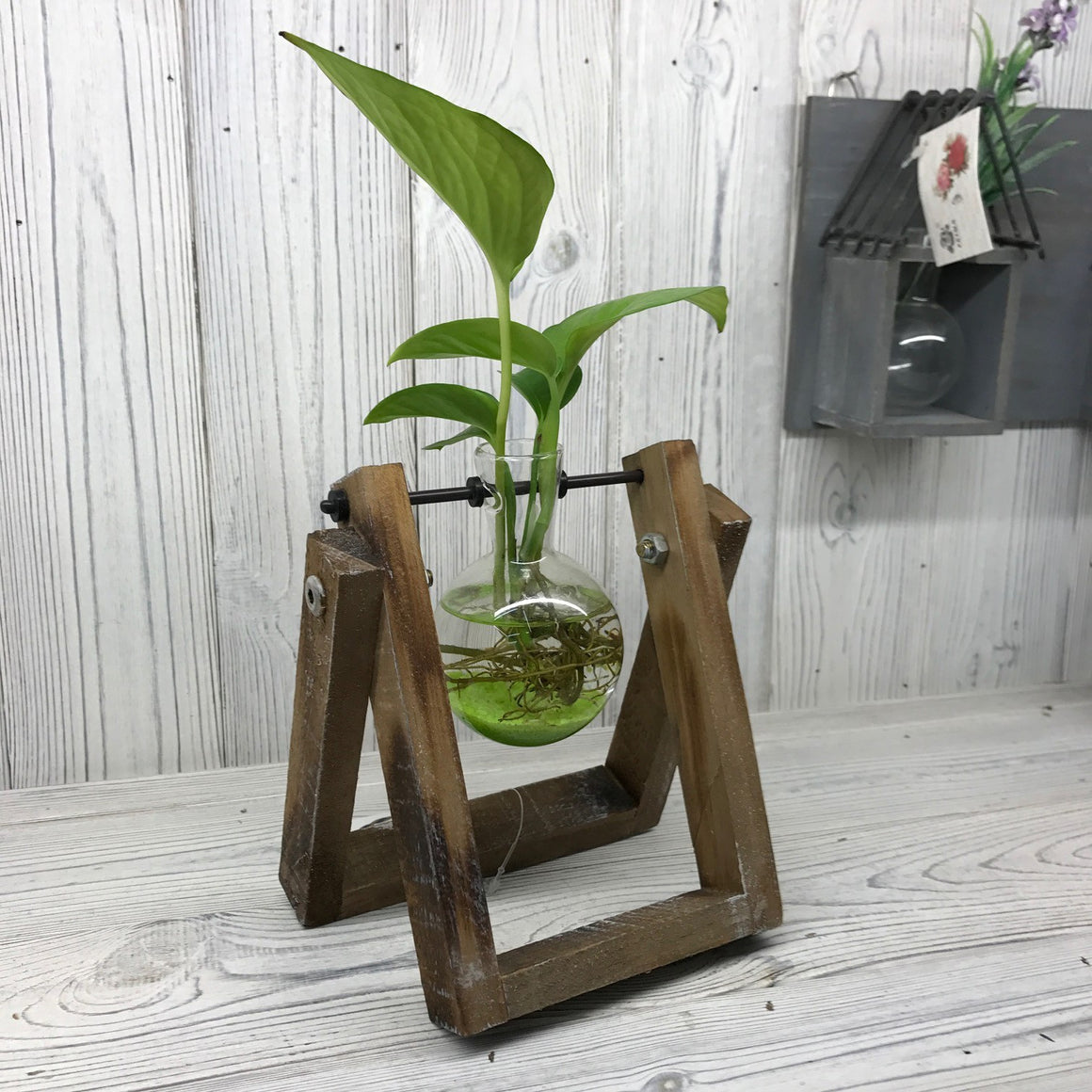 Hydroponic Home Decor - One Pot Wooden Stand