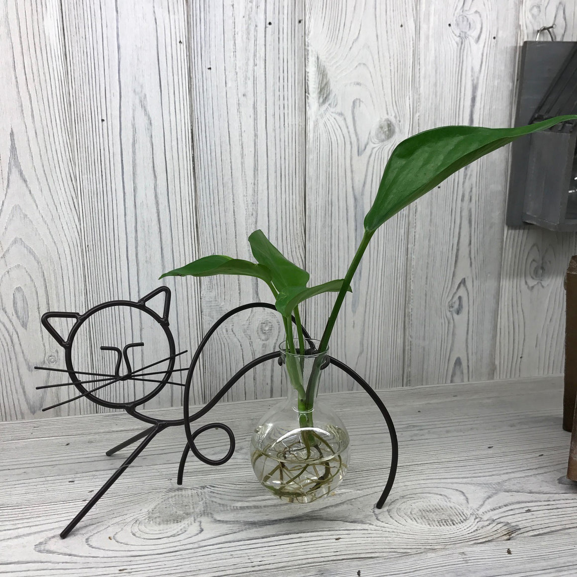 Hydroponic Home Decor - Cat One Pot Stand