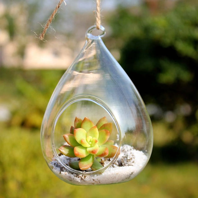 Decorative Hanging Drop Terrarium