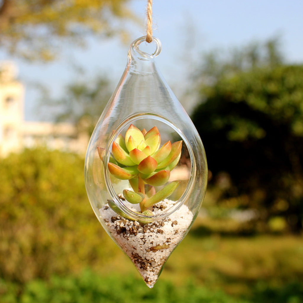 Decorative Hanging Glass Terrarium