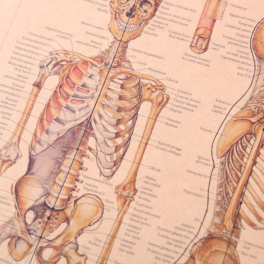 The Skeleton Of The Body Structure Nervous System Poster Look4ward