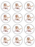 Gerbil Mouse Edible Icing Cake Topper
