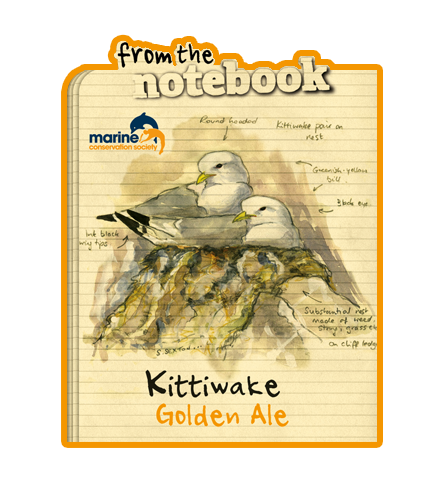 From the Notebook - Kittiwake