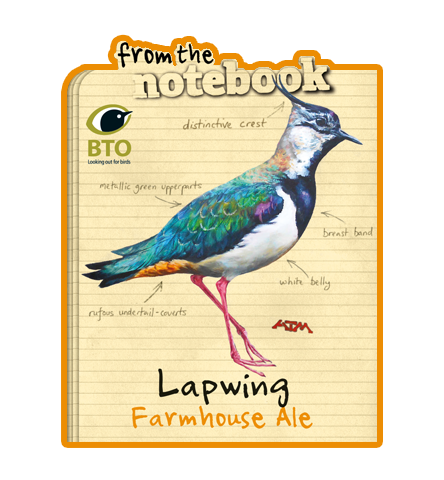 From the Notebook - Lapwing