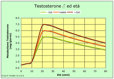 testosterone levels throughout life